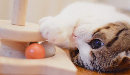 猫が大好きなおもちゃ!CattyMan『グルグル 玉ころ』で猫が遊んでくれました