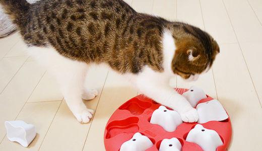 ニーナ・オットソンの知育玩具 Dog Magic(ドッグマジック)で犬と猫と遊んでみました!