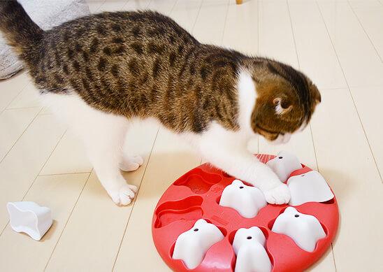 ドッグマジック 猫 スコティッシュフォールド 遊べる 知育トイ おやつ
