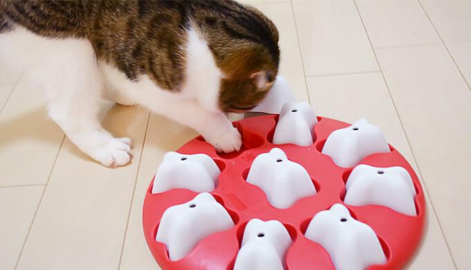 ドッグマジック 猫 スコティッシュフォールド 遊べる 知育トイ