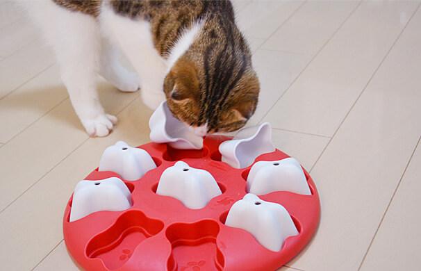 ドッグマジック 猫 スコティッシュフォールド 知育トイ 遊べる おやつ 見つけた