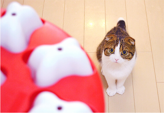 猫 ドッグ マジック できる? ペット 知育 トイ