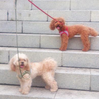 御岳山 武蔵御嶽神社周遊コース 階段 ペット 犬