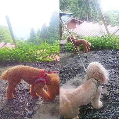 御岳山 武蔵御嶽神社周遊コース 坂道 犬