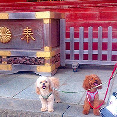 犬 武蔵御嶽神社 御岳山 おいぬ様 狛犬