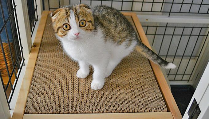 ナチュラルワン 3段 猫 ケージ 2階