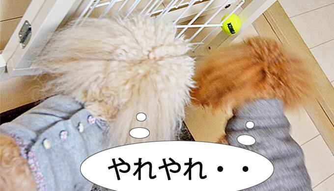 コング スクイークエアー 超小型犬用 ボール kong squeakair xs