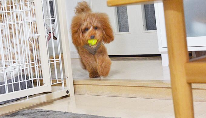 コング スクイークエアー 超小型犬用 kong squeakair xs ボール