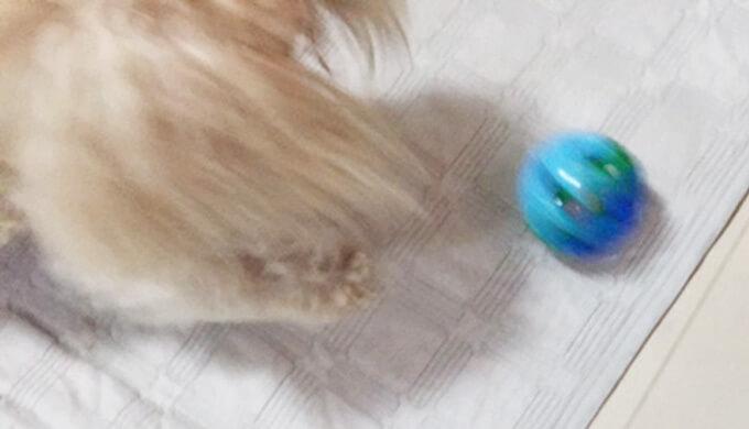 ダイソー ペット おもちゃ ころころボール ペキプー
