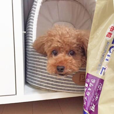 ダイゾー ペット おもちゃ 興味ない 犬