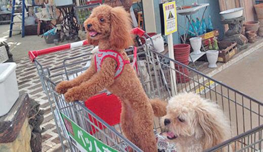 犬と一緒にホームセンター(ジョイフル本田の超大型店)へ行ってきました
