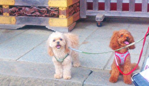犬と一緒にやさしい登山【御岳山】武蔵御嶽神社へ犬と一緒に行って来ました