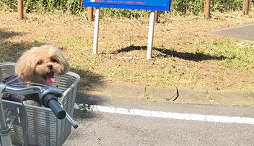 犬と一緒に国営武蔵丘陵森林公園へサイクリングに行くときの注意点