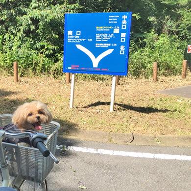 ペキプー トイプードル 国営武蔵丘陵森林公園 サイクリングコース