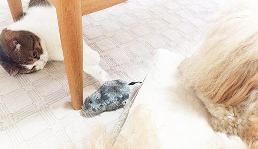 犬も猫も興味津々、ダイソーのペット用おもちゃ『ピューっと走るねずみ』