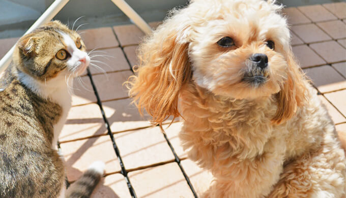 犬 日光浴