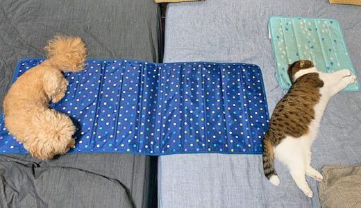 【熱中症になりやすい犬と猫の種類】暑がりな犬と猫に大人気!ひんやり冷感アイテムを紹介します