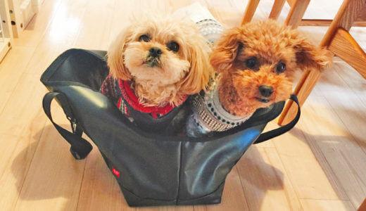 フリーステッチ(free stitch)のキャリーバッグは愛犬との暮らしに便利で大活躍です!