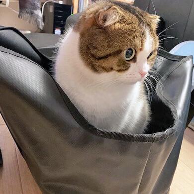猫 フリーステッチ