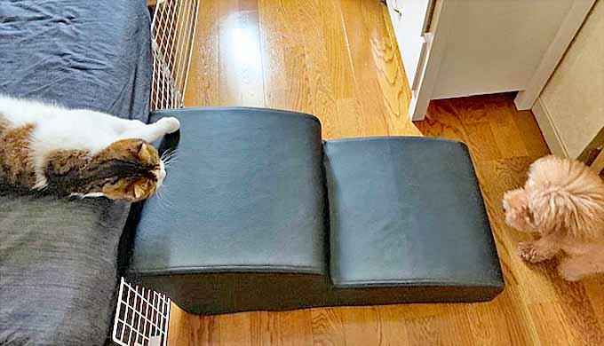犬 階段 ステップ 猫