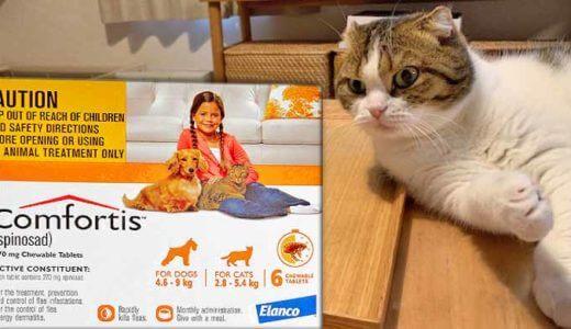 愛猫には、食べるタイプのノミ駆除薬【コンフォティス】がオススメです。最安値情報を紹介します!