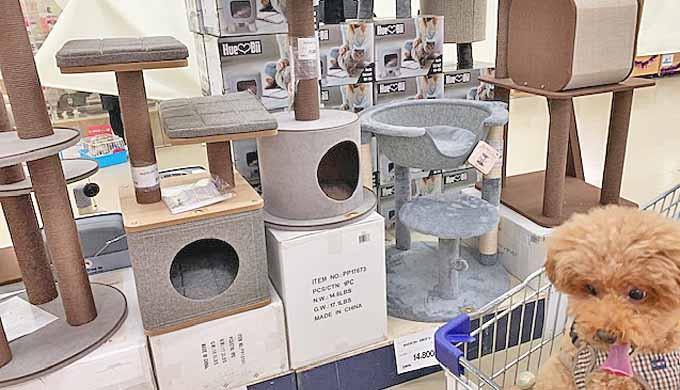 ジョイフル キャットタワー