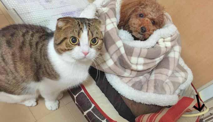 犬猫 ヒーター2