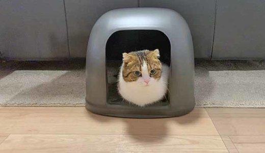 猫は汚れたトイレに入らない!猫が喜ぶトイレ環境を紹介します