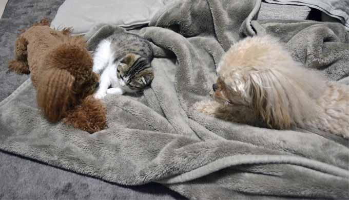 犬猫 防寒 室内