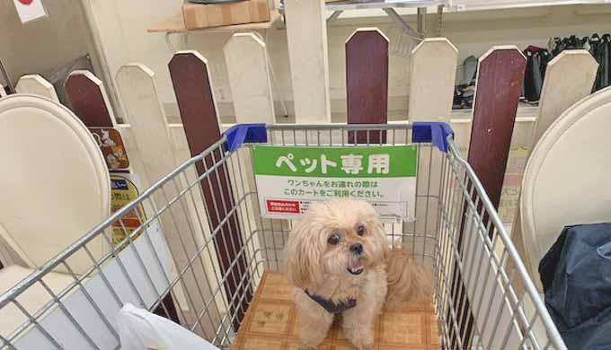 ペキプー ジョイフル本田 ドッグラン