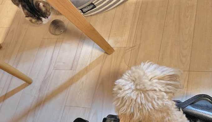 犬猫 おもちゃ ボール