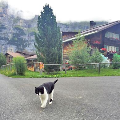 スイス 猫