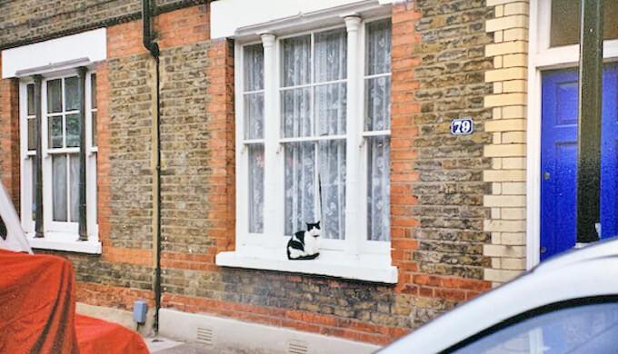 イギリス 猫 家