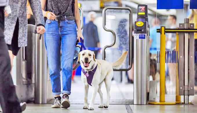 イギリス 犬 電車