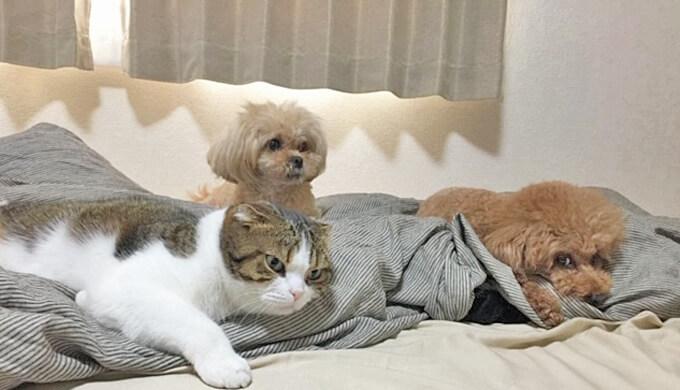 犬と猫 3匹 仲良し