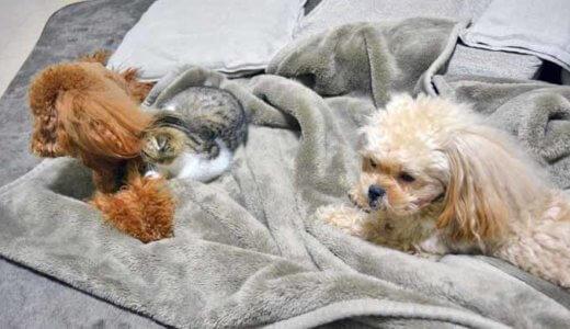犬と猫の多頭飼い!暮らしの工夫やアイディアを紹介します