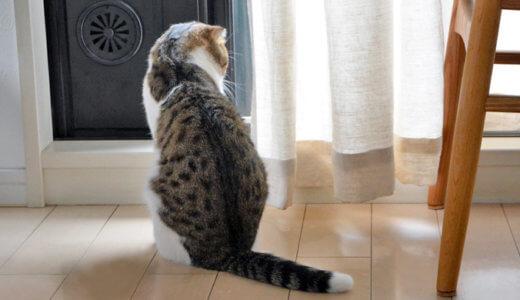 猫にも日光浴は必要です【猫の日向ぼっこ】効果と注意点!