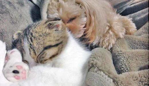 犬と猫を一緒に飼いたい!多頭飼いの上手なコツと注意点