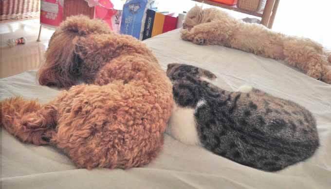 犬と猫の多頭飼い2