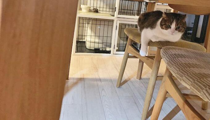 猫 椅子の上