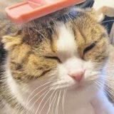 猫ブラッシング