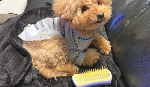 犬のブラッシング方法と注意点