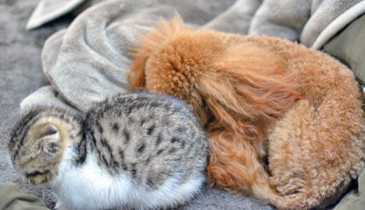犬と猫が寒い時にする仕草と行動を解説します