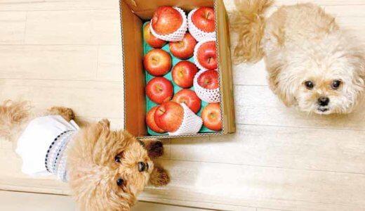 犬が食べてはいけない食材とオススメの食材を紹介します