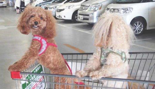 犬が車酔いする原因と症状!対策と注意点を紹介します