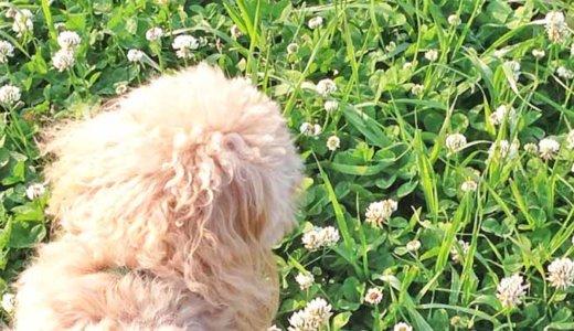 犬のノミ・ダニ駆除とフィラリア・内部寄生虫予防の適切な対策時期!